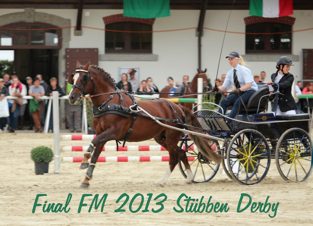 Freiberger Hengst Don Fenaco, Finals Avenches, Stübben Derby, 2013